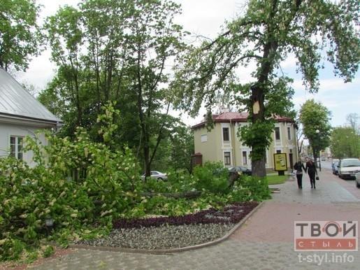 Фотофакт: из-за сильного ветра на ул. Ожешко обвалилось дерево (фото) - фото 2