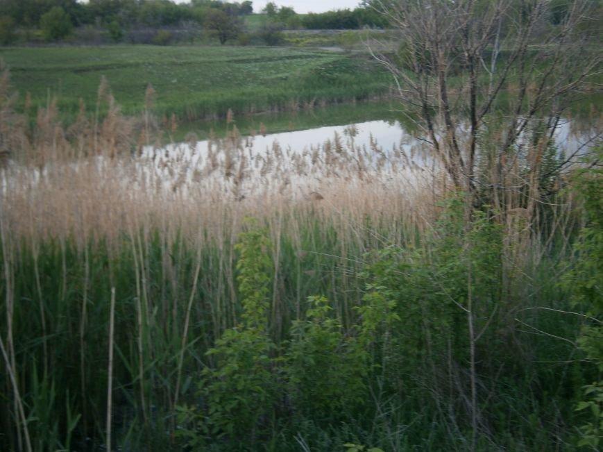 Кто остановит канализационный потоп в Димитрове? (фото) - фото 12