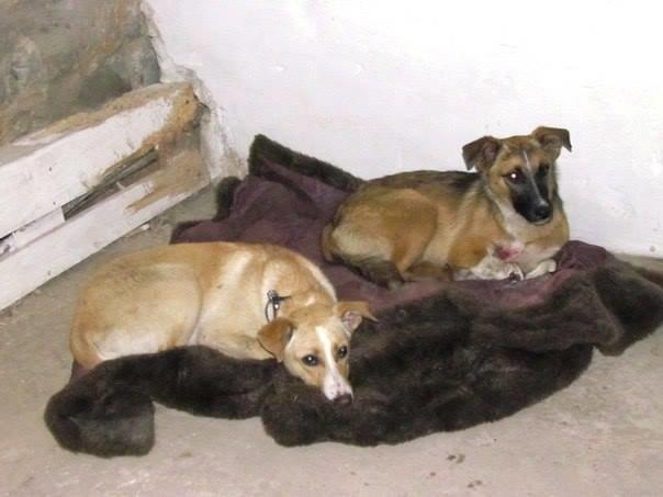 Кинолог полка «Азов» вывезла из Широкино 5 собак (ФОТО), фото-3