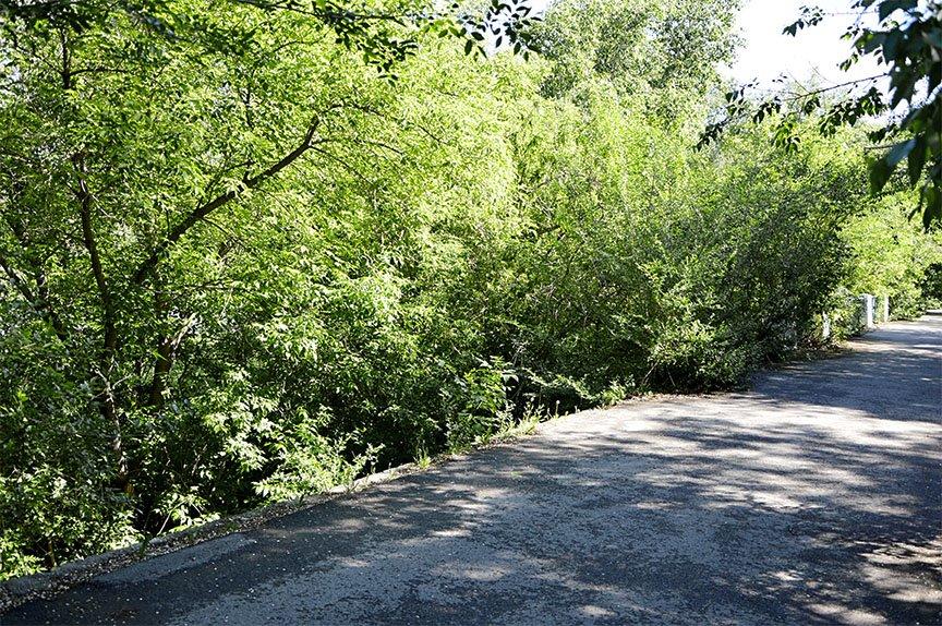 Отсутствие ограждения по дороге от ЦДК к областной ббольнице