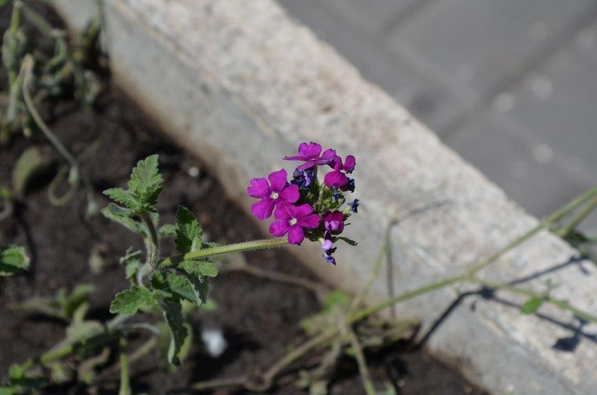 Фотопятница: цветущий город, фото-24