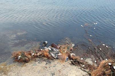 Берег лимана в Одесской области усыпан мертвыми птицами (ФОТО) (фото) - фото 1