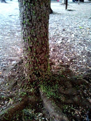 В Симферополе очередное нашествие зеленых гусениц (ФОТОФАКТ), фото-4