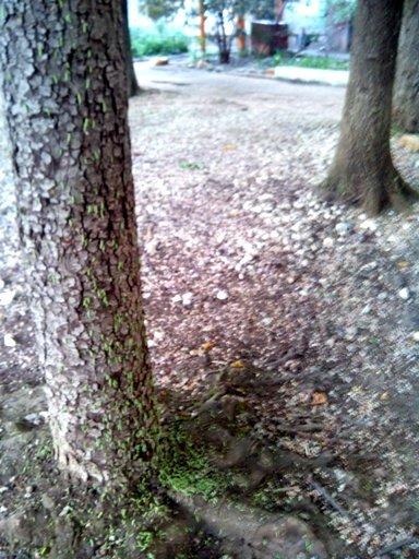 В Симферополе очередное нашествие зеленых гусениц (ФОТОФАКТ), фото-2