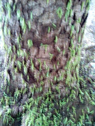 В Симферополе очередное нашествие зеленых гусениц (ФОТОФАКТ), фото-3