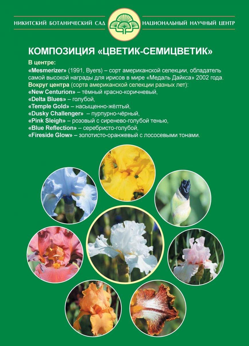 ирисы-семицветик
