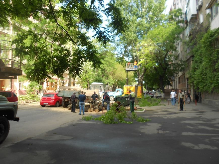 В центре Одессы упало дерево и перегородило дорогу (ФОТО) (фото) - фото 1