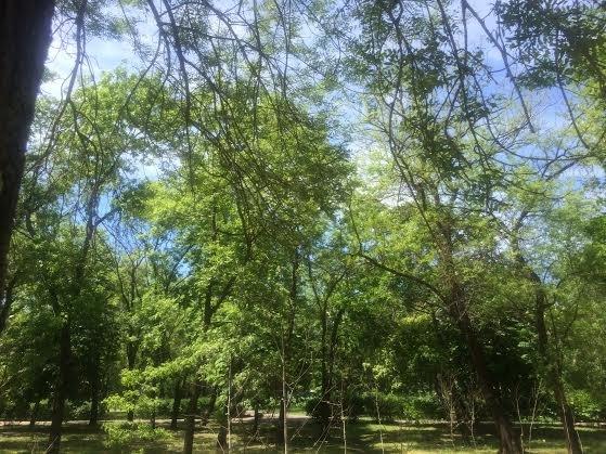 В Мариуполе в Городском саду сегодня лучше не гулять нельзя. Деревья спасают от листовертки (Фотофакт) (фото) - фото 1