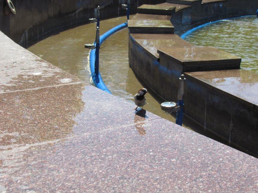 В центре Мариуполя забил фонтан в 1000 кубометров воды (ФОТО), фото-3
