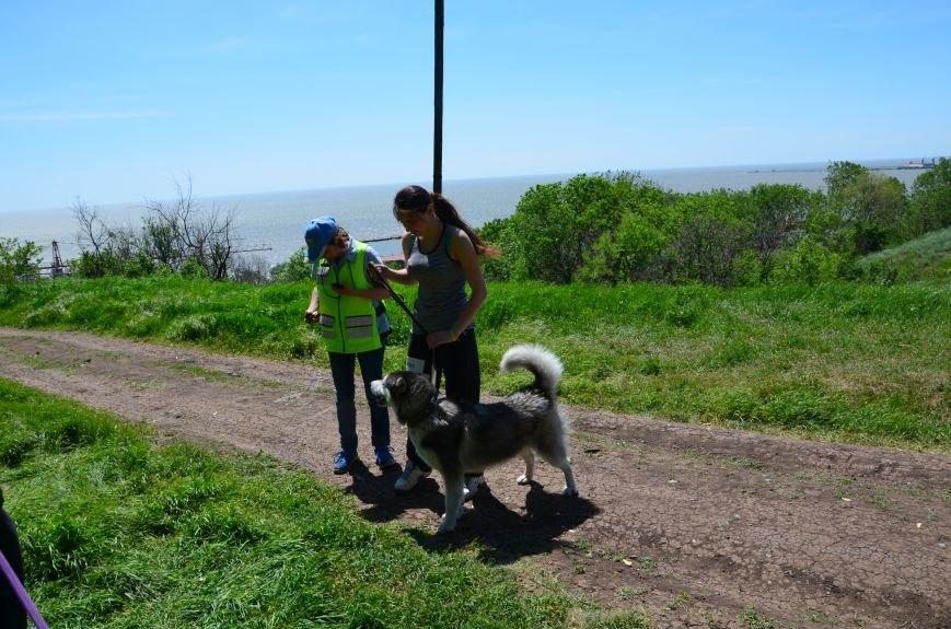 В Мариуполе владельцы собак устроили забег в Приморском парке (ФОТОРЕПОРТАЖ), фото-16