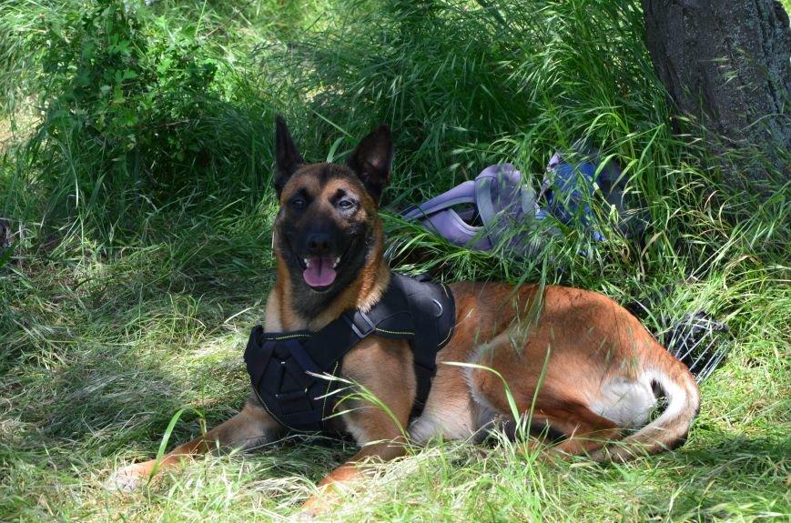 В Мариуполе владельцы собак устроили забег в Приморском парке (ФОТОРЕПОРТАЖ), фото-19