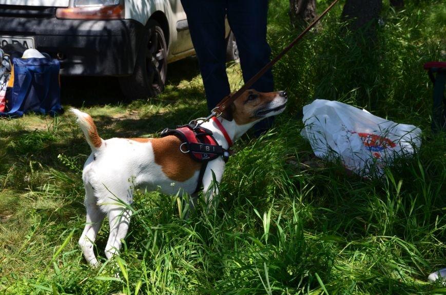 В Мариуполе владельцы собак устроили забег в Приморском парке (ФОТОРЕПОРТАЖ), фото-12