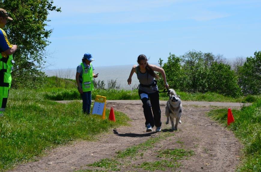 В Мариуполе владельцы собак устроили забег в Приморском парке (ФОТОРЕПОРТАЖ), фото-22
