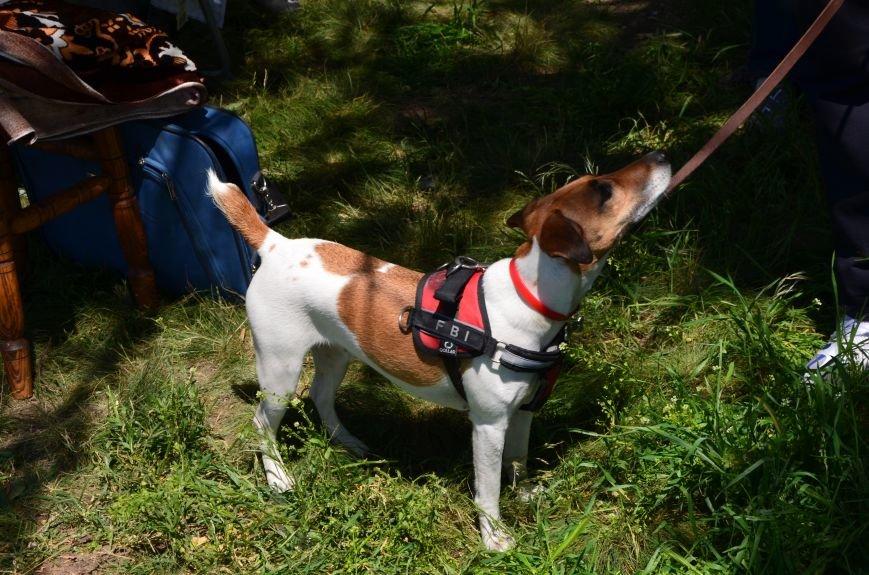 В Мариуполе владельцы собак устроили забег в Приморском парке (ФОТОРЕПОРТАЖ), фото-11