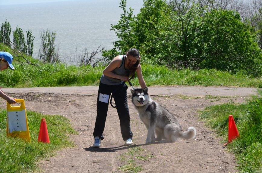В Мариуполе владельцы собак устроили забег в Приморском парке (ФОТОРЕПОРТАЖ), фото-21