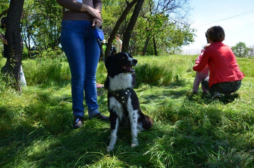 В Мариуполе владельцы собак устроили забег в Приморском парке (ФОТОРЕПОРТАЖ), фото-17