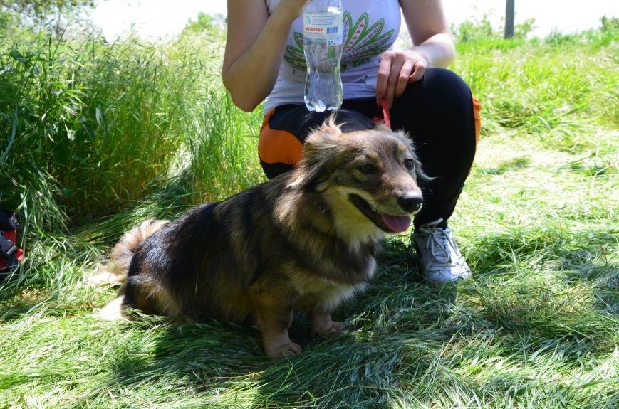 В Мариуполе владельцы собак устроили забег в Приморском парке (ФОТОРЕПОРТАЖ), фото-25