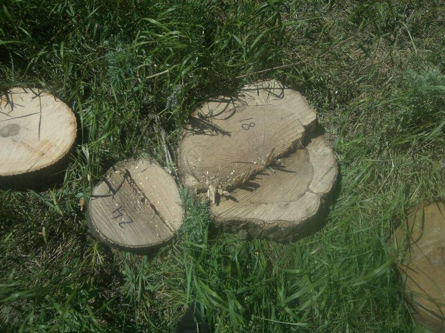 Краматорские лесорубы понесут уголовную ответственность, фото-1