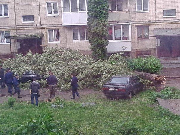 Через грозу у Львові впало дерево: постраждали два автомобілі (ФОТОФАКТ) (фото) - фото 1
