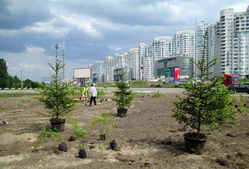 КГГА посадила деревья на месте скандальной застройки на Осокорках (ФОТО), фото-3