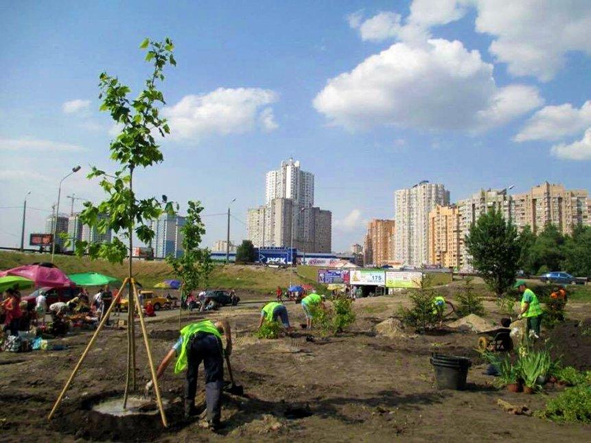 КГГА посадила деревья на месте скандальной застройки на Осокорках (ФОТО), фото-2