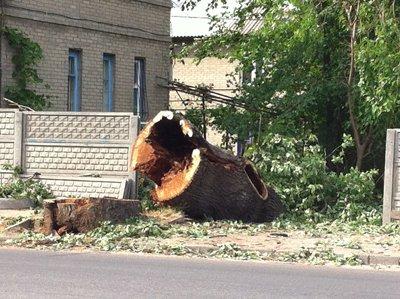Днепропетровск лишился 200-летнего дуба-великана (ФОТО), фото-2