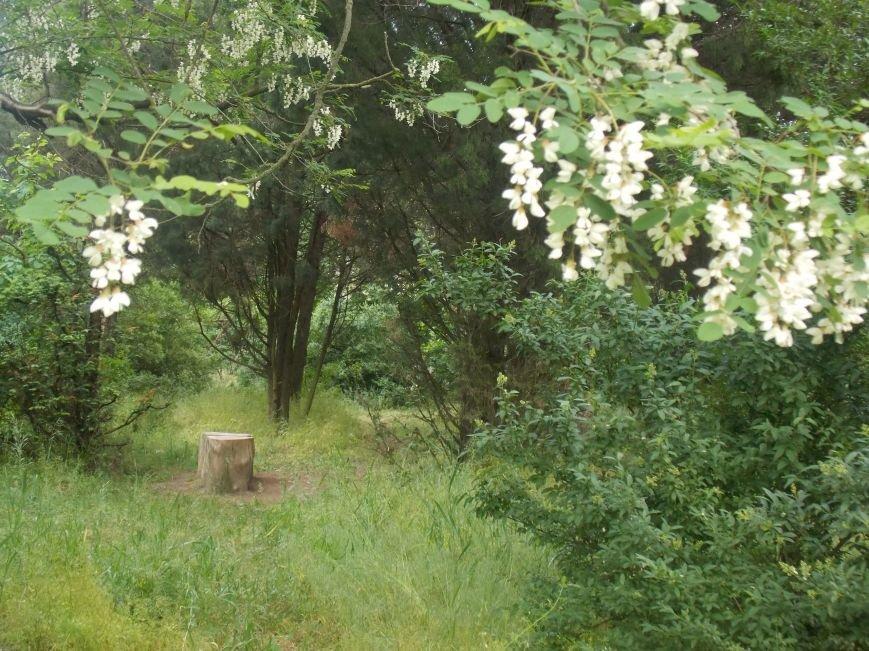 Запорожскому дендропарку дали «вторую жизнь» (ФОТОРЕПОРТАЖ) (фото) - фото 3