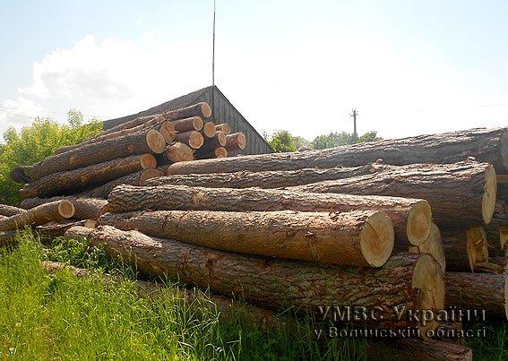 На Волині міліція вилучила незаконно вирубаного лісу на майже 100000 гривень (ФОТО) (фото) - фото 1
