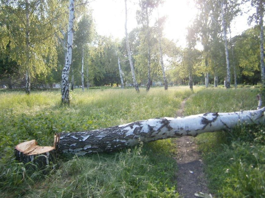 В Димитрове «плачут» березы: в городском парке появились березовые пеньки (фото) - фото 4