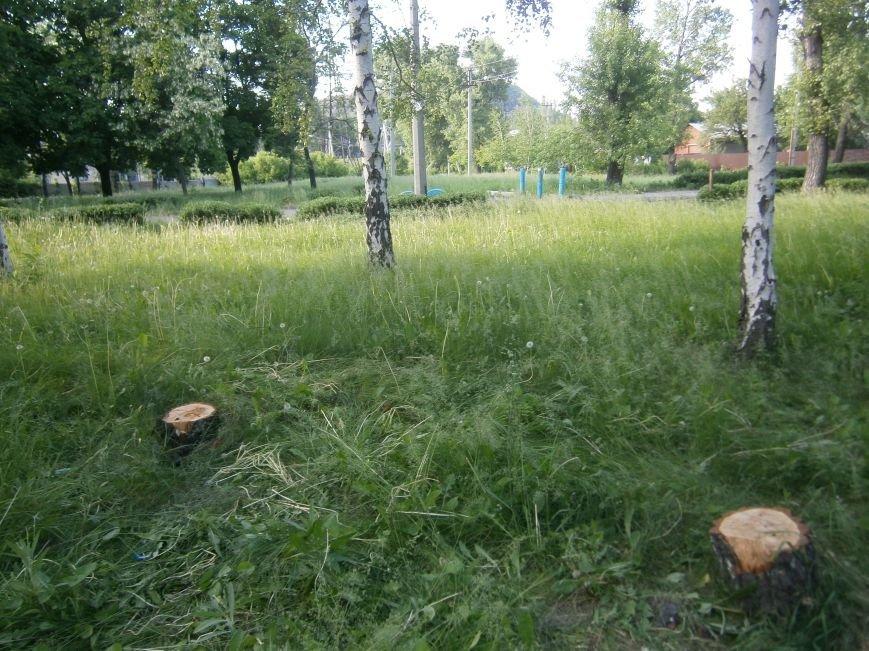 В Димитрове «плачут» березы: в городском парке появились березовые пеньки (фото) - фото 6