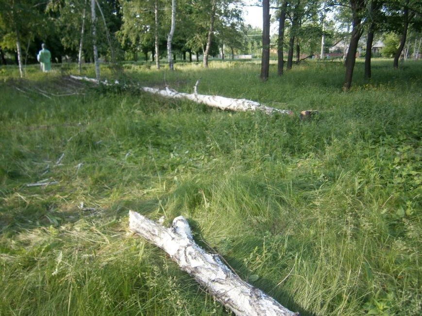 В Димитрове «плачут» березы: в городском парке появились березовые пеньки (фото) - фото 1
