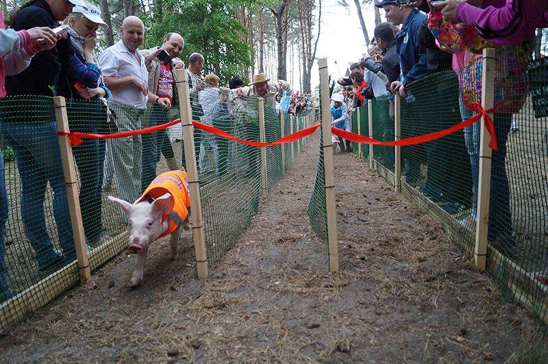 В белгородском Пикник-парке прошли поросячьи бега (фото) - фото 1