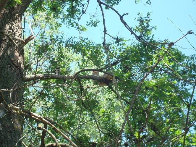 В Мариуполе на дереве две недели сидит котенок (ФОТО) (фото) - фото 1