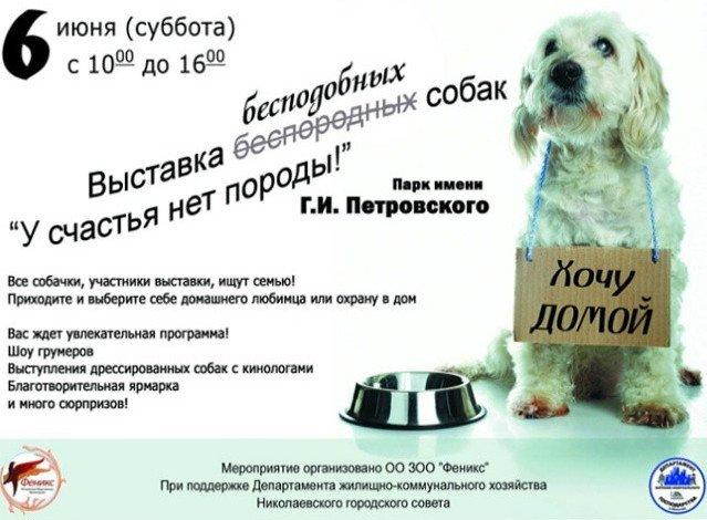 Николаеве пройдет выставка бездомных животных «У счастья нет породы» (фото) - фото 1