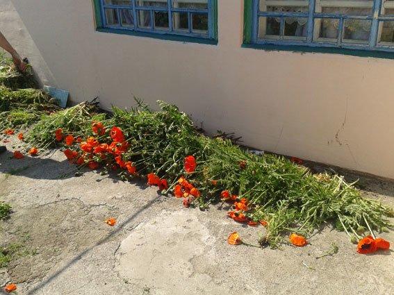 У Полтавському районі жінка вирощувала снотворний мак на власному городі (фото) - фото 1
