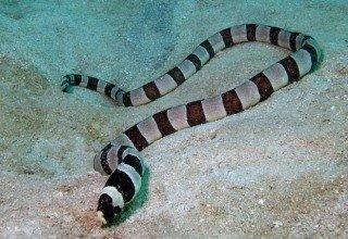 На одесском пляже обнаружили рыбу, которая выглядит, как полосатая змея (ФОТО) (фото) - фото 1