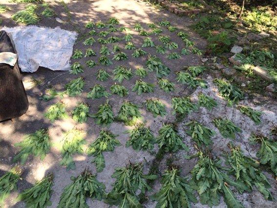 В Романково обнаружена плантация конопли и мака (фото) - фото 1