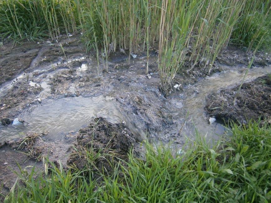 Природоохранная бездеятельность: в Димитровском пруду снова начала всплывать рыба (фото) - фото 10