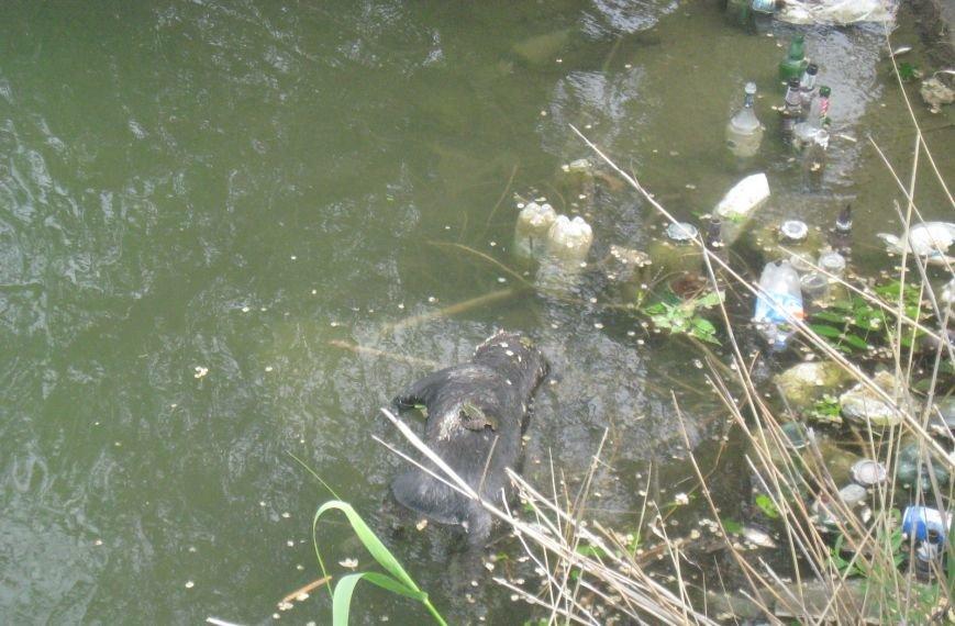 Природоохранная бездеятельность: в Димитровском пруду снова начала всплывать рыба... и не только, фото-5