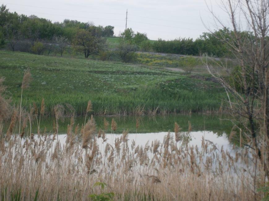 Природоохранная бездеятельность: в Димитровском пруду снова начала всплывать рыба (фото) - фото 12