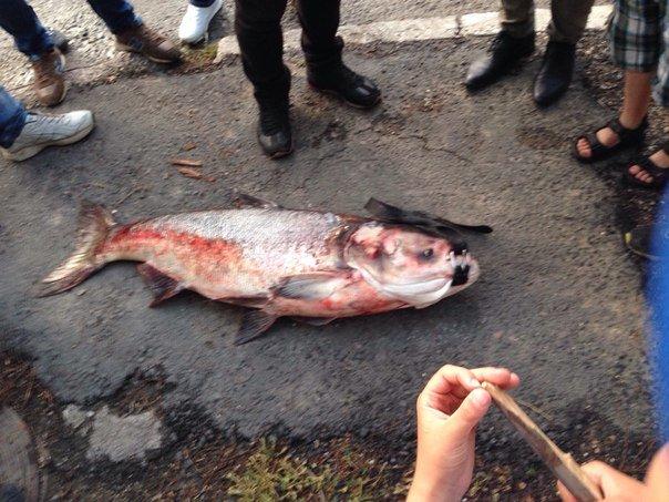 В Салгире начали ловить крупную рыбу и сплавляться по реке на матрасах (ФОТОФАКТ), фото-1