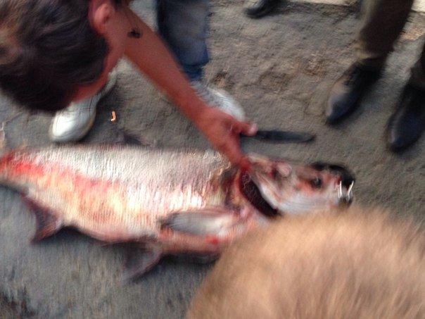 В Салгире начали ловить крупную рыбу и сплавляться по реке на матрасах (ФОТОФАКТ) (фото) - фото 3