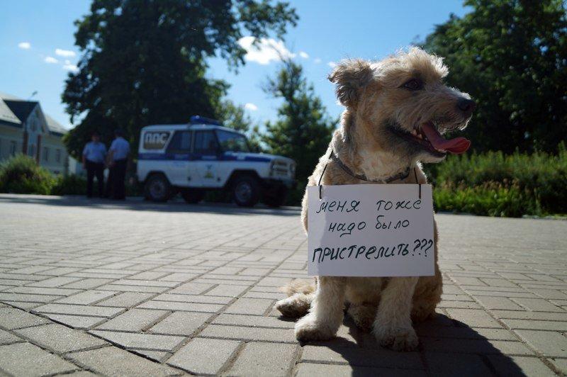Белгородские зоозащитники предлагают ввести налог на разведение животных и прекратить отстрел (фото) - фото 4