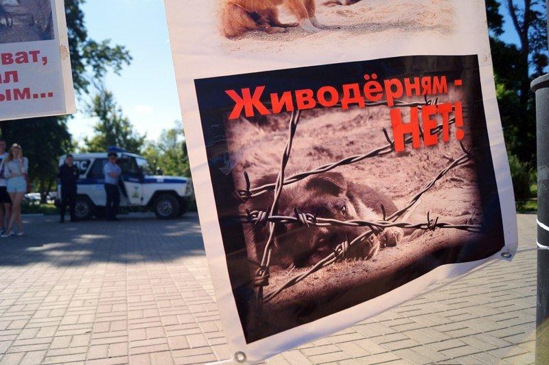 Белгородские зоозащитники предлагают ввести налог на разведение животных и прекратить отстрел (фото) - фото 3