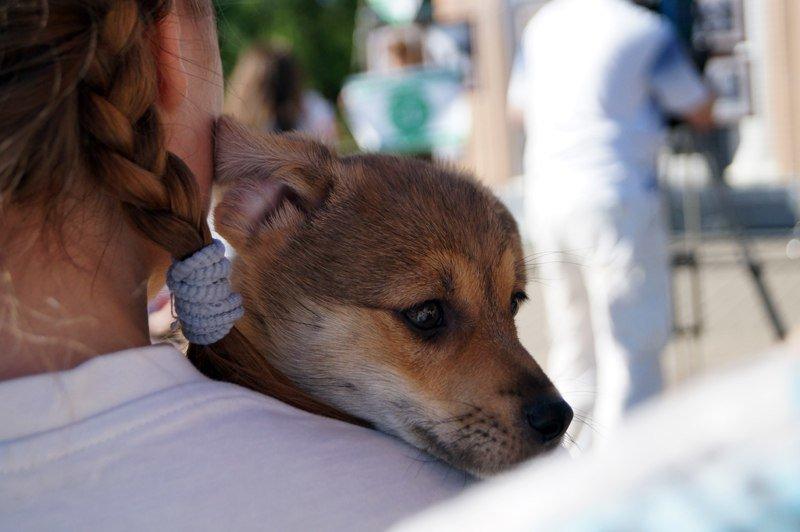 Белгородские зоозащитники предлагают ввести налог на разведение животных и прекратить отстрел (фото) - фото 1