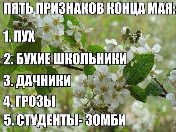 «Ничоси лето!», как выглядят жители Марьинки и Мишка-одессит - фотожабы уходящей недели (фото) - фото 1