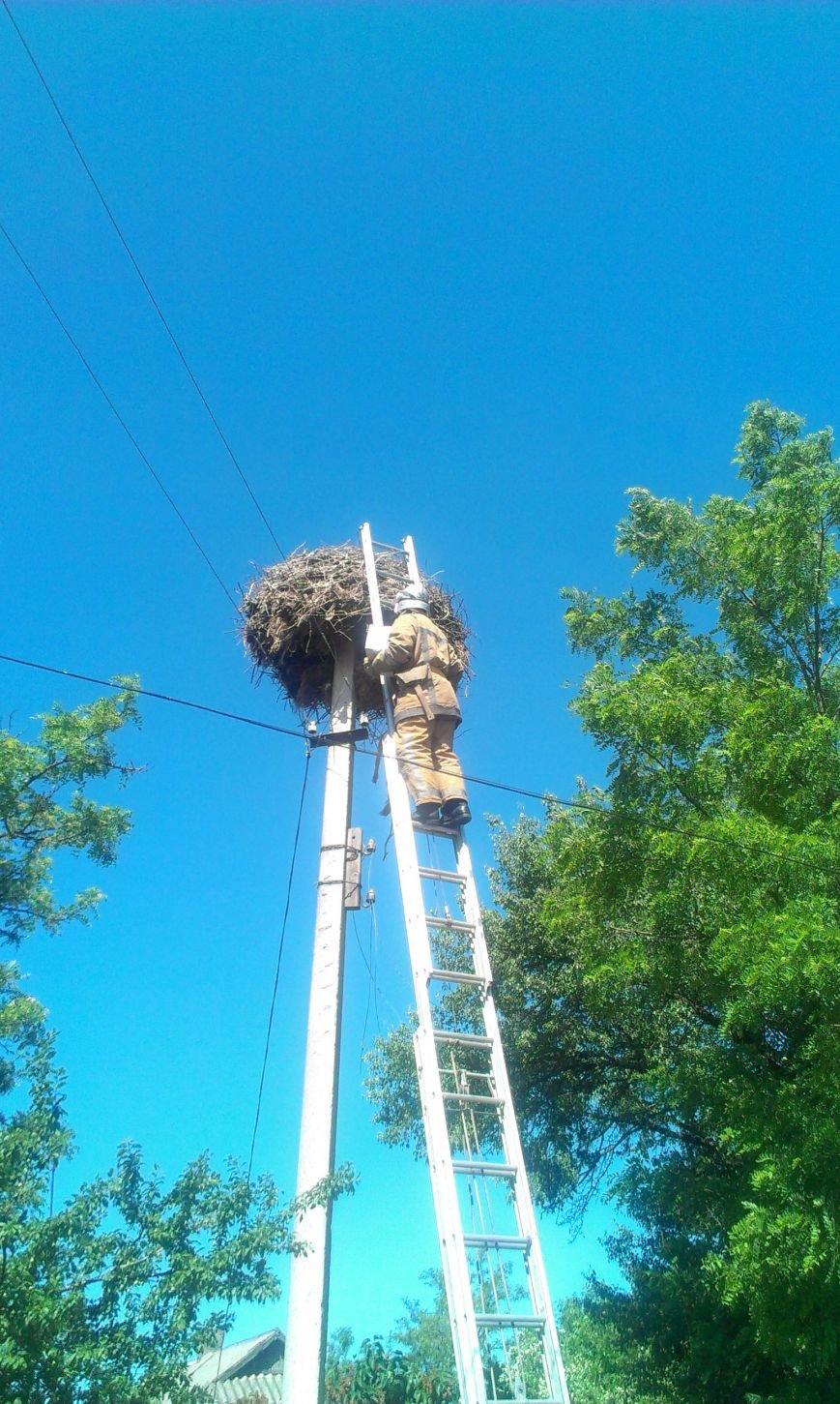 На Кіровоградщині врятували лелеченя, яке випало з гнізда. ФОТО (фото) - фото 1