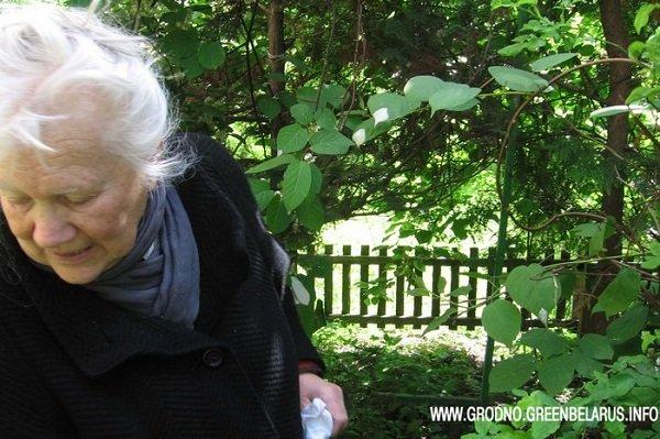 В центре Гродно жители нескольких домов не могут поделить дворовую территорию, а крайними оказались зеленые насаждения (фото) - фото 1