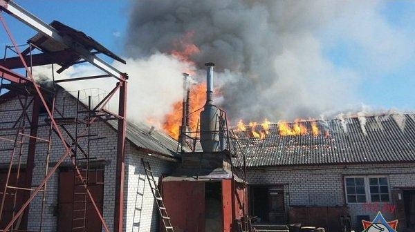 В Лиде произошел пожар на предприятии по изготовлению гробов и венков (фото) - фото 3