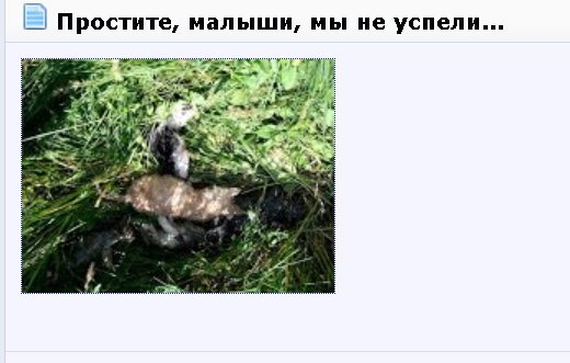 Одесский парк наводнили котятами со Староконки. На аллеях десятки трупов (ФОТО) (фото) - фото 1